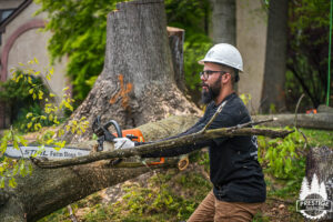 Top 3 Benefits of Hiring Professional Tree Services